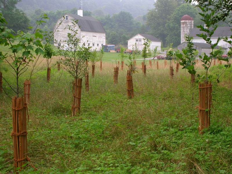 BioBark Tree Shelters in Maryland by EcoDepot